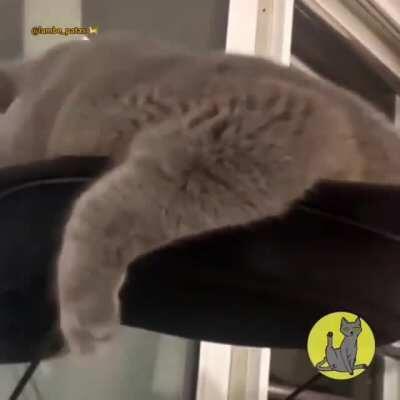 Gato do Super Xandão ai