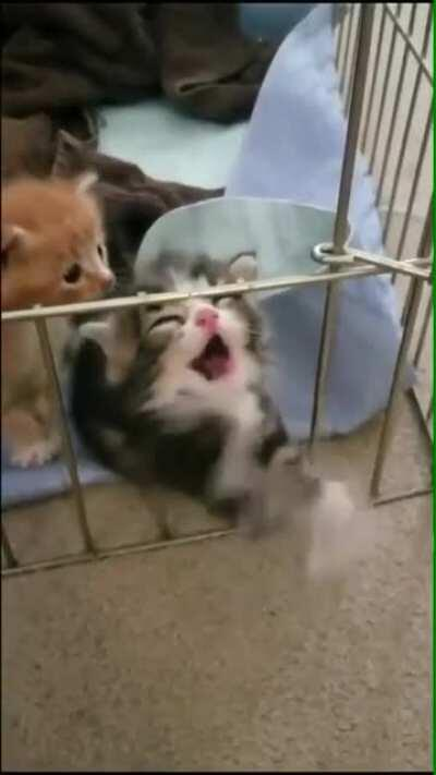 release me from this prison, hooman