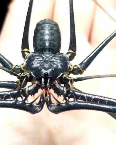 spiderbro