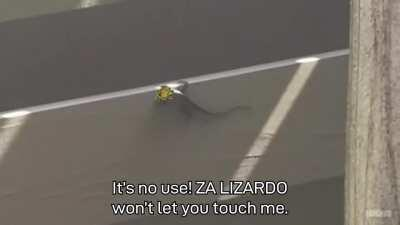 I spent a week of my life editing two lizards to fight with stando powa