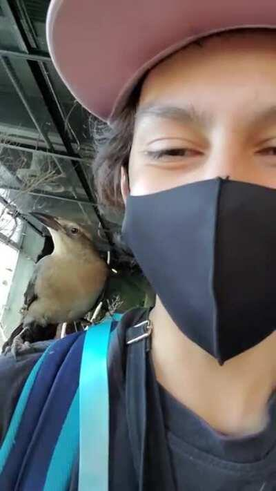What could go wrong when you have a bird on your shoulder.