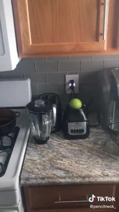 Apple on a blender? What could go wrong?