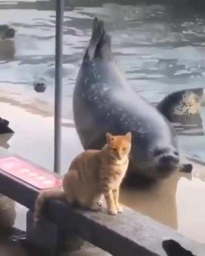 Derpy Seal of Approval