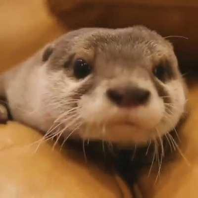 I definitely need an otter