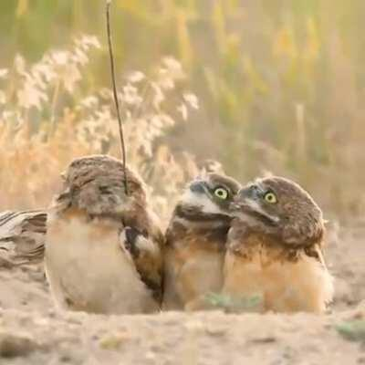 Owl shows of his stick
