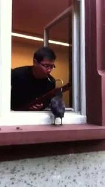 Concerto in Crow Sharp