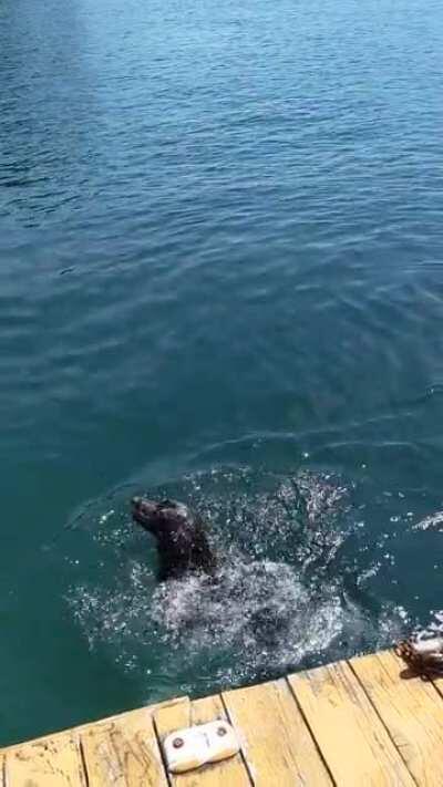 AquaticAsFuck