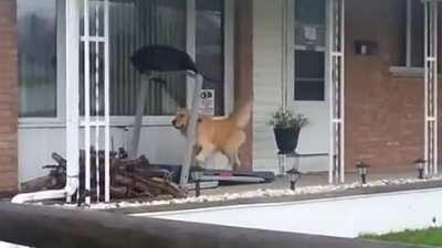 When you want to go for a walk but it's raining...