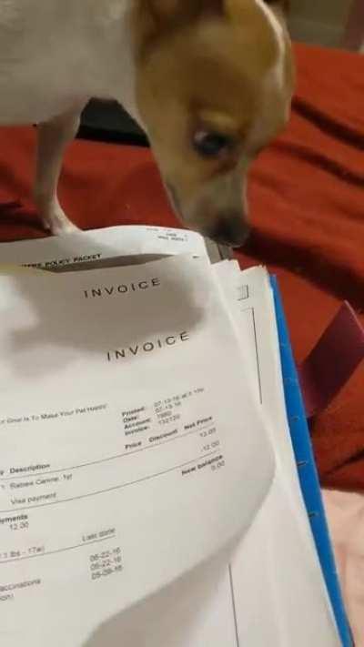 Dog screams in invoices
