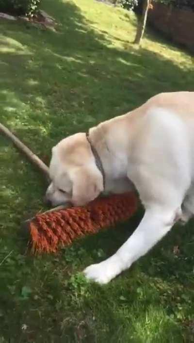 Dog brushes her away