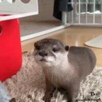 Otter Destruction !