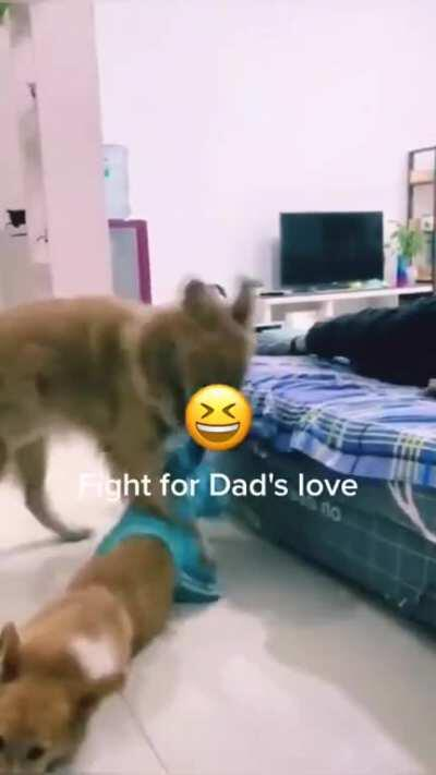 Fight for dad's love