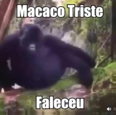 O macaco tá triste 😔😭