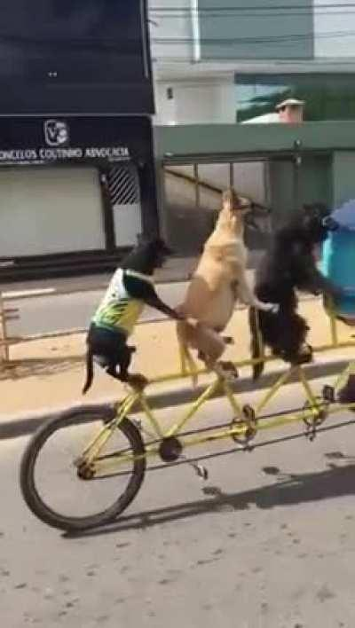Bicycle Boyes