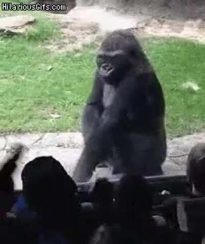 Ох уж эти приматы...