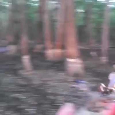Driving a quad into a tree