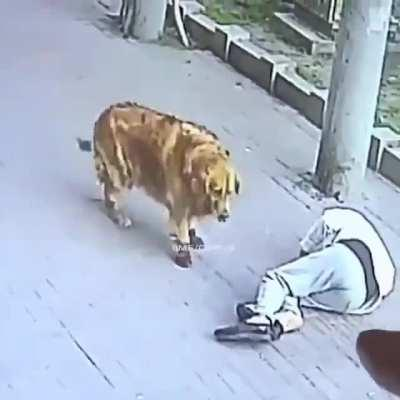 a cat falling on man's head and a dog in shoes controls the man