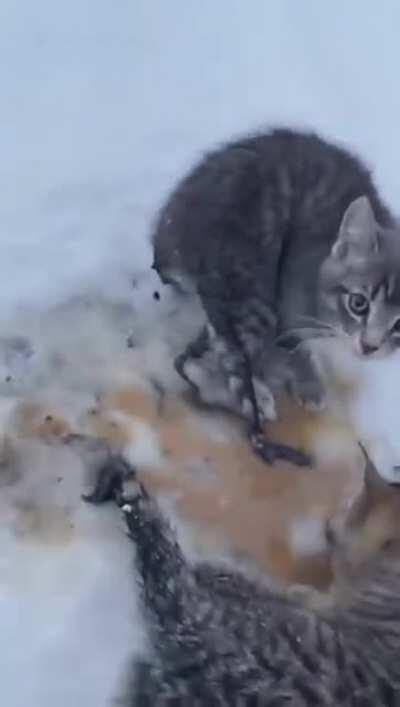 Using lukewarm coffee to rescue frozen, abandoned kittens (Kendal Diwisch)