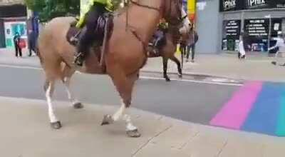 Based and redpilled horses