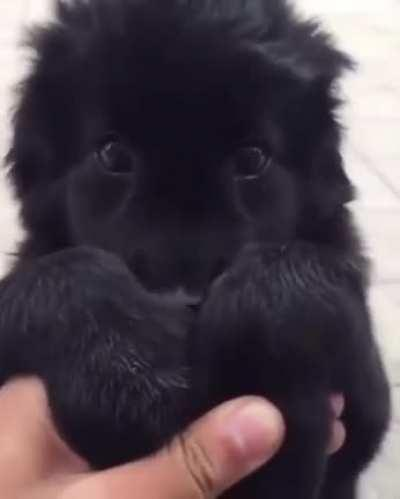 Hold my paws