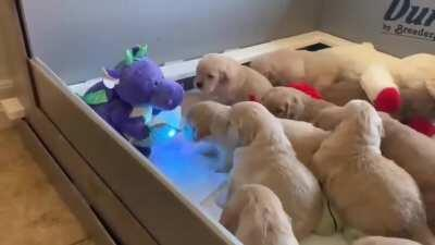 Dragon reading a bedtime story to puppies