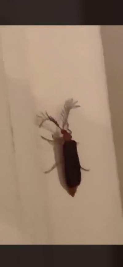 bitch, a eyelash bug!