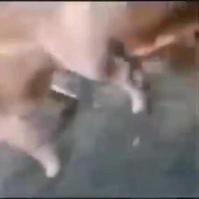 Noooooo perro culiaoooo