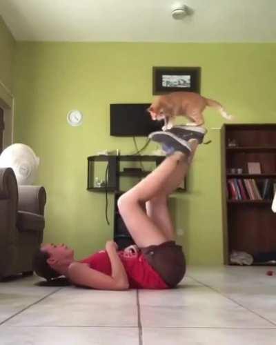 A treadmill for a kitty