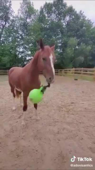 Horse go yeet