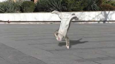 Morgana doin the funny dance!?!?😳😳😳😳