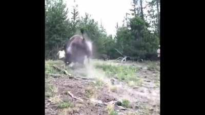 Little girl gets yeeted by a Bison