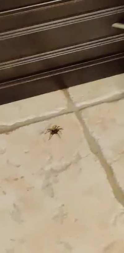 2 humans vs 1 spider...
