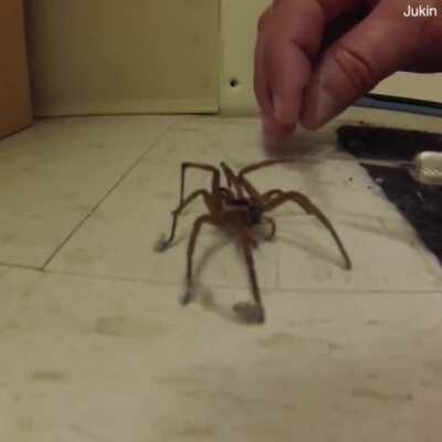 🔥 Here is a man cleaning a spider's feet