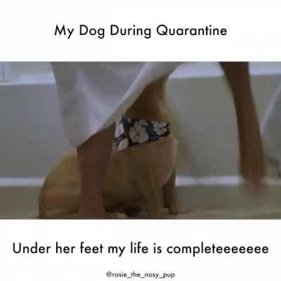 dogvideos