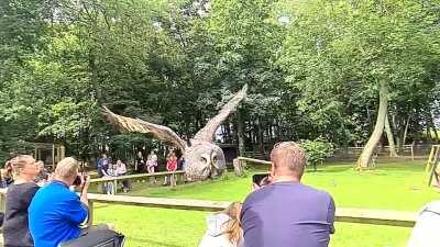 Got super lucky with this slow mo shot of an owl at Bridlington wildlife park!