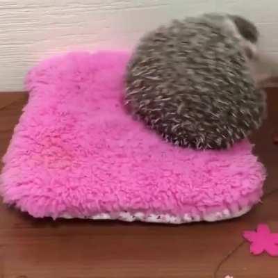 Hedgehoggo does himself a bamboozle