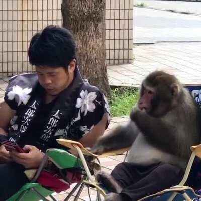 What secret must have the monkey heard