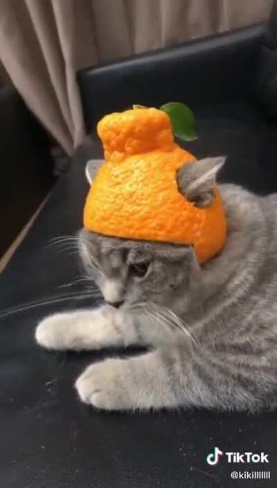 Hat break Cat