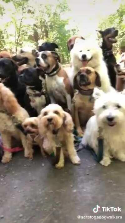So many well-behaved floofs