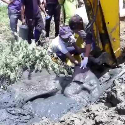 🔥 Saving an elephant buried in mud