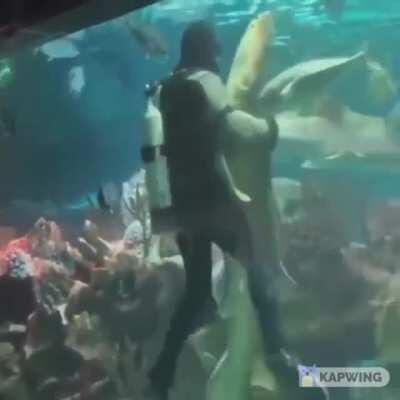 Diver dances with shark