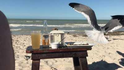 Seagull taking my food...