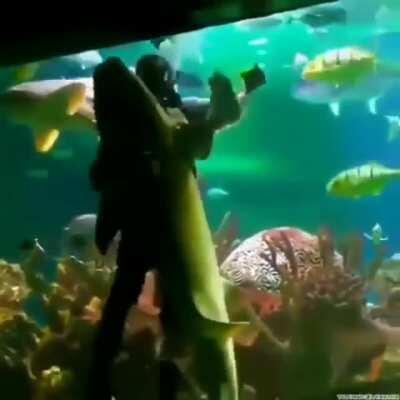 A Scuba Diver dancing with A Shark