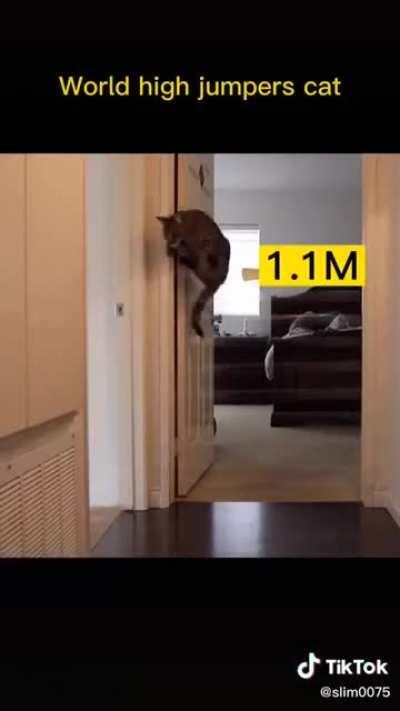 Cat jump high