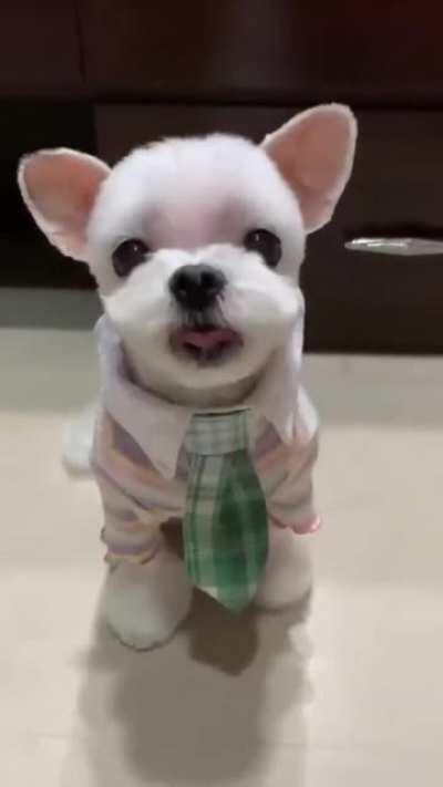 Stylish Puppy