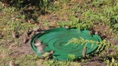 Wir haben für die Vögel ein kleines Bad im Garten bereit gestellt. Heute war da reger Betrieb.