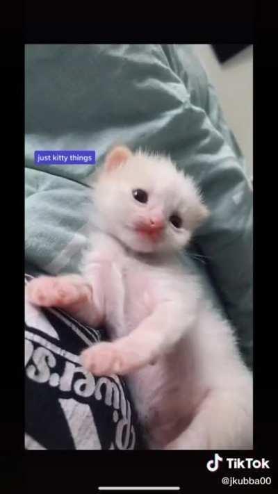 Diary of a foster kitten