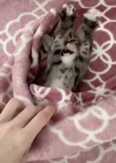good morning kitten!