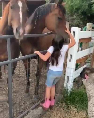 Sending some love to your horses can make others jealous.