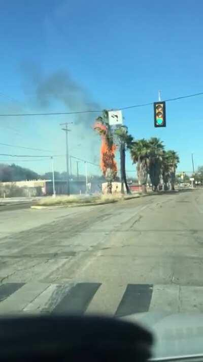 Random palm tree fire in Texas